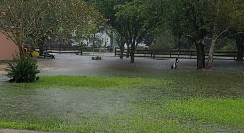 Front yard before the Saturday rain. Almost all under water.